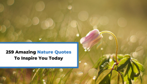 Read more about the article 259 Amazing Nature Quotes To Inspire You Today