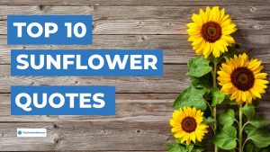 Read more about the article 90 Beautiful Sunflower Quotes To Brighten Your Day